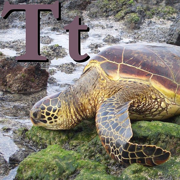 Файл:T is for Turtle.JPG