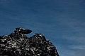 Table Mountain - panoramio (10).jpg