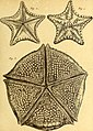Tableau encyclopédique et méthodique des trois règnes de la nature (1791) (14581461408).jpg