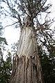 Tahune-Air walk-Tasmania-Australia02.JPG