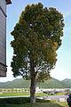Tamba municipal ueno memorial art museum07 2048.jpg