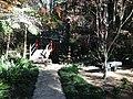 Tamborine Mountain Botanic Gardens 13.JPG