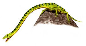 1847 in paleontology - Macroscelosaurus is probably the same as Tanystropheus.