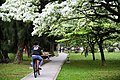 Taoyuan, Taoyuan District, Taoyuan City, Taiwan - panoramio (13).jpg