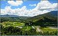 Taro Fields, Hanalei, Kauai (9863657395).jpg