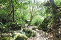 Tayrona Walk - Calabazo to Pueblito (4626279320).jpg