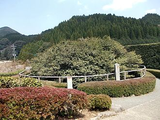 Ureshino, Saga - The Tea Tree at Mount Fudō