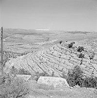 טרסות בעין כרם, ירושלים