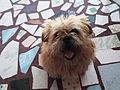 Terrier-2-xavier cottage-yercaud-salem-India.JPG