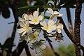 Thai Flower (47641774761).jpg