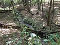 The Babbling Brook - panoramio.jpg