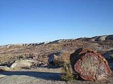 The Crystal Forest-Petrified Forest National Park-Arizona1253.JPG