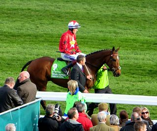 The New One (horse) Irish-bred Thoroughbred racehorse