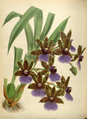 The Orchid Album-01-0086-0028.png
