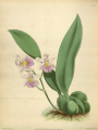 The Orchid Album-01-0122-0040.png