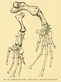 The Osteology of the Reptiles-196 kjh fgh.png