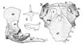 The Osteology of the Reptiles p129 Fig-99.png