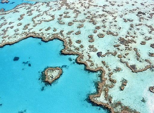 The heart reef, part of the Great Barrier Reef near Airlie Beach, Whitsunday Islands, Queensland
