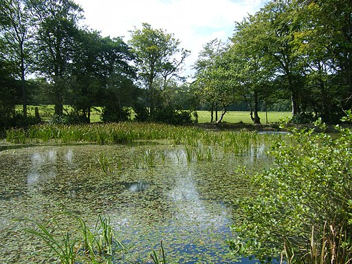The lake at Llanerchaeron - geograph.org.uk - 1806405