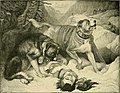 The new book of the dog - a comprehensive natural history of British dogs and their foreign relatives, with chapters on law, breeding, kennel management, and veterinary treatment (1911) (14763636405).jpg