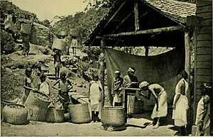 Tea-tribes of Assam - Newly immigrated Tea Garden workers at work in colonial Assam (1907)