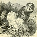 The royal natural history (1893) (14784818875).jpg