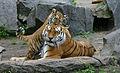 Tiger berlin-2.jpg