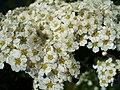 Tinyflowers2.jpg