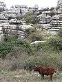 Torcal de Antequera 66a.jpg