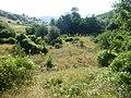 Tortoises in Krushevska Reka valley - P1100150.JPG