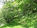 Track from Pont Tyddyn Mawr to Bryn-y-gath - geograph.org.uk - 492955.jpg