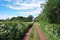 Track next to Honibere Wood, near Burton - geograph.org.uk - 172487.jpg