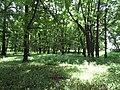 Trebisov Andrassyovsky kastiel (park)-07.JPG