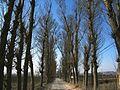 Tree-lined trail - panoramio.jpg