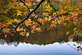 Tree branch fall leaves lake reflection - West Virginia - ForestWander.jpg