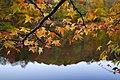 Tree branch fall leaves lake reflection - West Virginia - ForestWander.jpg