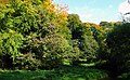Trees at Minnowburn - geograph.org.uk - 1008396.jpg