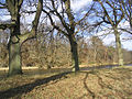 Trees by the River Tweed - geograph.org.uk - 332735.jpg