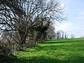 Trees near Manor Farm, Galmpton Creek - geograph.org.uk - 368780.jpg