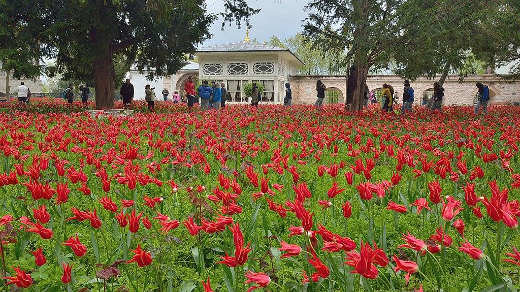 Tulip garden in Istanbul