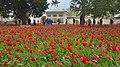 Tulip garden in Istanbul.JPG