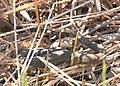 Two snakes and an eel (3823846705).jpg