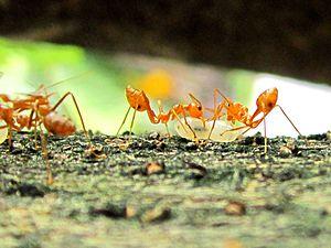 ants сборка фриза скачать