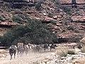 U.S. Mail - Flickr - desertdutchman.jpg