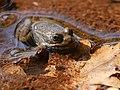 UFO - unidentified froggy object (23545338628).jpg