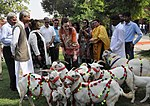 USAID Launches Women Empowerment Initiative in the Livestock Sector of South Punjab (33705554014).jpg