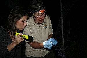 Betty Nguyen - Nguyen learning about endangered bat species