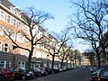 Ulmus glabra Cornuta (amsterdam milletstraat) 030223c.jpg
