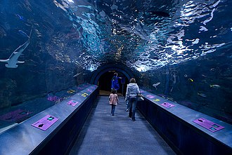 Newport Aquarium - The underwater tunnel