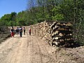 Uništavanje šume - panoramio.jpg